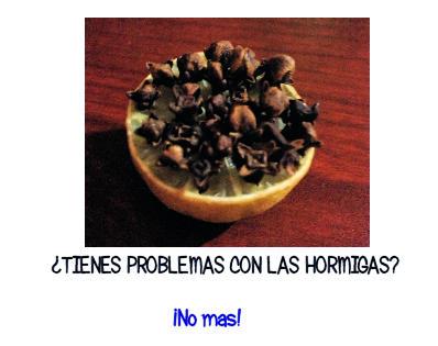 Remedio para las hormigas
